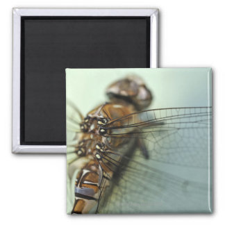 Dragonfly close-up magnet