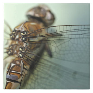 Dragonfly close-up tile