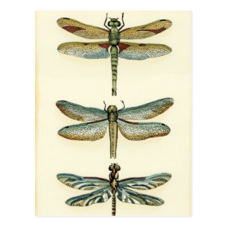 Dragonfly Collection by Chariklia Zarris Postcard
