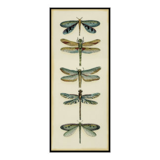 Dragonfly Collection by Chariklia Zarris Poster
