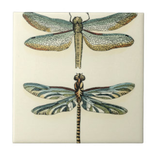 Dragonfly Collection by Chariklia Zarris Tile