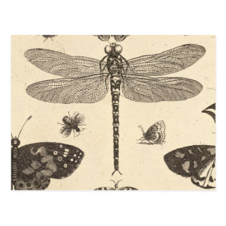 Dragonfly detail Vintage Art Post Card