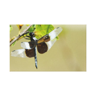 Dragonfly Gallery Wrapped Canvas