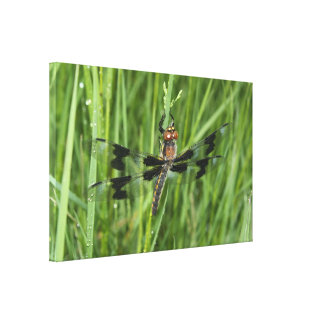 Dragonfly in field stretched canvas print