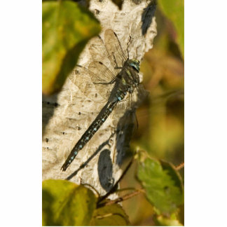 Dragonfly in Kanuti National Wildlife Refuge Photo Sculptures