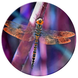 Dragonfly In Orange and Blue Plate