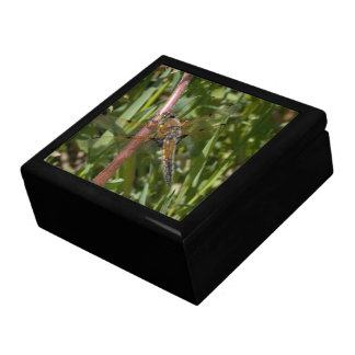 Dragonfly in the Weeds Jewelry Box