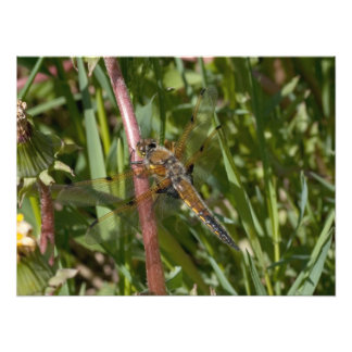 Dragonfly in the Weeds Art Photo