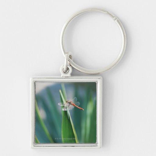 Dragonfly Keychains