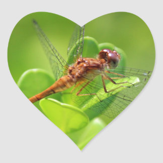 Dragonfly Landed on Green Garden Plant Heart Sticker
