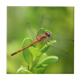 Dragonfly Landed on Green Garden Plant Small Square Tile