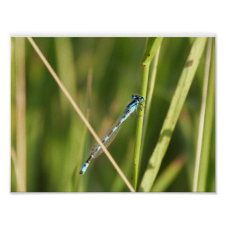 Dragonfly Nature Poster