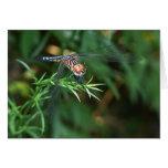 Dragonfly on a twig card