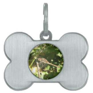 Dragonfly on a Twig Pet Tag