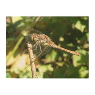Dragonfly on a Twig Wood Canvas