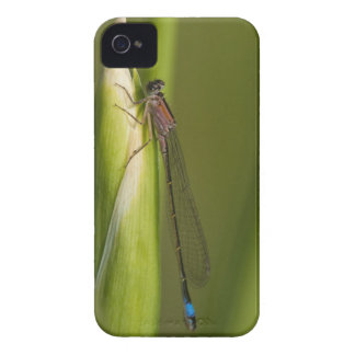 Dragonfly on budded iris iPhone 4 case