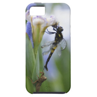 Dragonfly on iris case for the iPhone 5