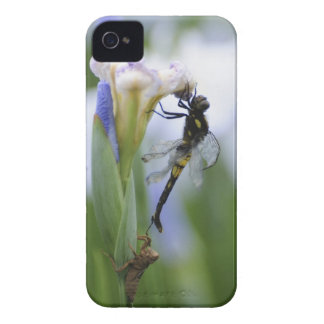 Dragonfly on iris iPhone 4 case