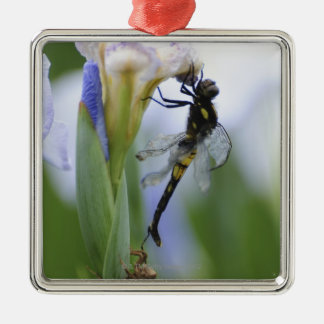 Dragonfly on iris Silver-Colored square decoration