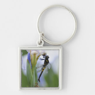 Dragonfly on iris Silver-Colored square key ring