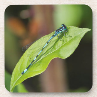 dragonfly on leaf coaster