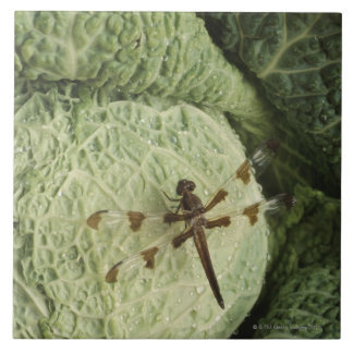 Dragonfly on lettuce tile