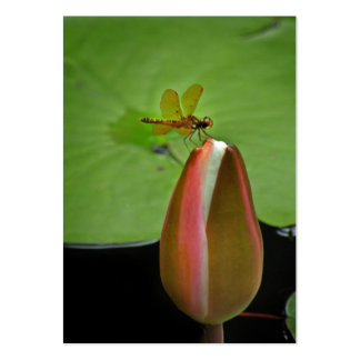 Dragonfly on Lily ATC Photo Card Pack Of Chubby Business Cards