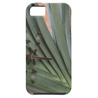 Dragonfly on plant iPhone 5 cases