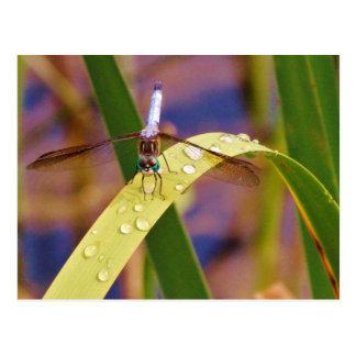 Dragonfly on raindrop leaf postcard