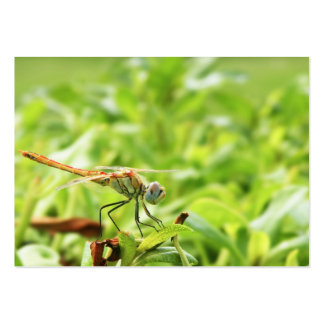 Dragonfly Pack Of Chubby Business Cards