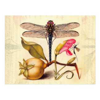 Dragonfly, Pear, Carnation, and Insect Postcard