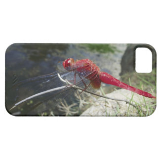 Dragonfly perching on branch, close up iPhone 5 cover