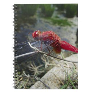 Dragonfly perching on branch, close up notebooks