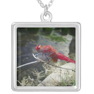 Dragonfly perching on branch, close up silver plated necklace