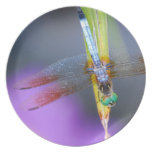 Dragonfly - plate