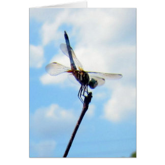 Dragonfly ~ Prepare for Take-off Card