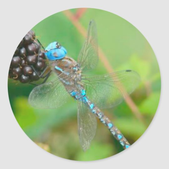 Dragonfly Raspberry Sticker