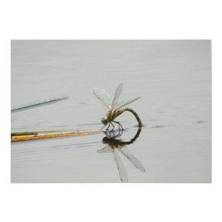 Dragonfly reflection 13 cm x 18 cm invitation card