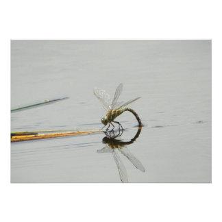 Dragonfly reflection custom invites
