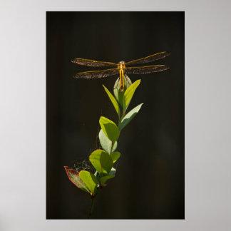 Dragonfly Resting on Blueberry Bush Print