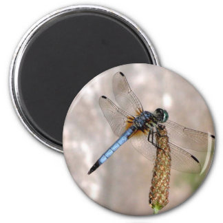 Dragonfly /Round Magnet