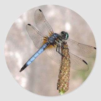 Dragonfly / Round Stickers