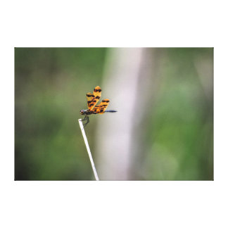 DRAGONFLY RURAL QUEENSLAND AUSTRALIA ART EFFECTS CANVAS PRINT