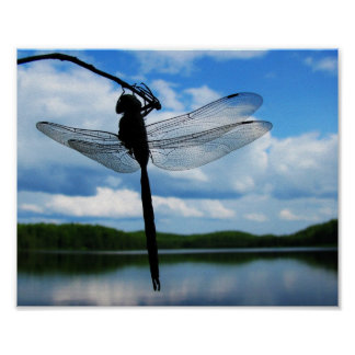 Dragonfly Silhouette Poster