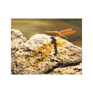 Dragonfly Sun Bathing Canvas Prints