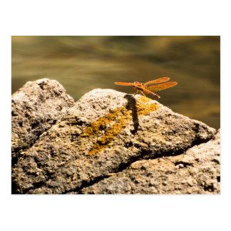 Dragonfly Sun Bathing Postcard