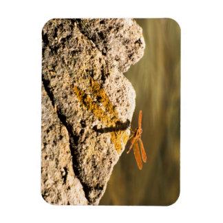 Dragonfly Sun Bathing Rectangular Photo Magnet