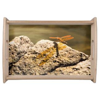 Dragonfly Sun Bathing Service Trays