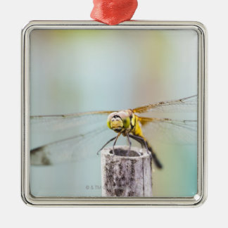 Dragonfly (Sympetrum infuscatum) 2 Christmas Ornament