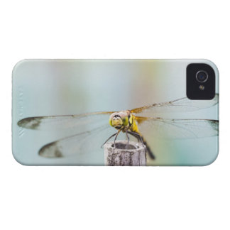 Dragonfly (Sympetrum infuscatum) 2 iPhone 4 Case